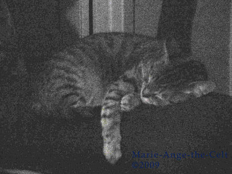 Nexu sleeps