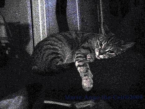 Nexu was sleeping
