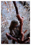Tiny monkey