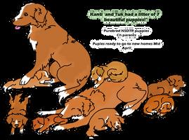 Kanti and Tuk Litter Image