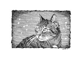 Cats with an attitude - 006