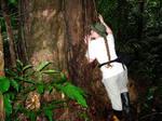 Hugging a large Iron Tree