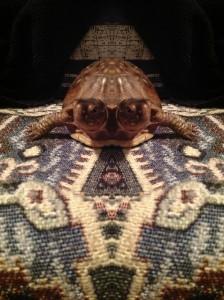 drogonnite's Profile Picture