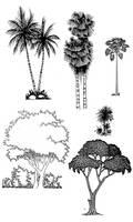 Tropical Tree Tone