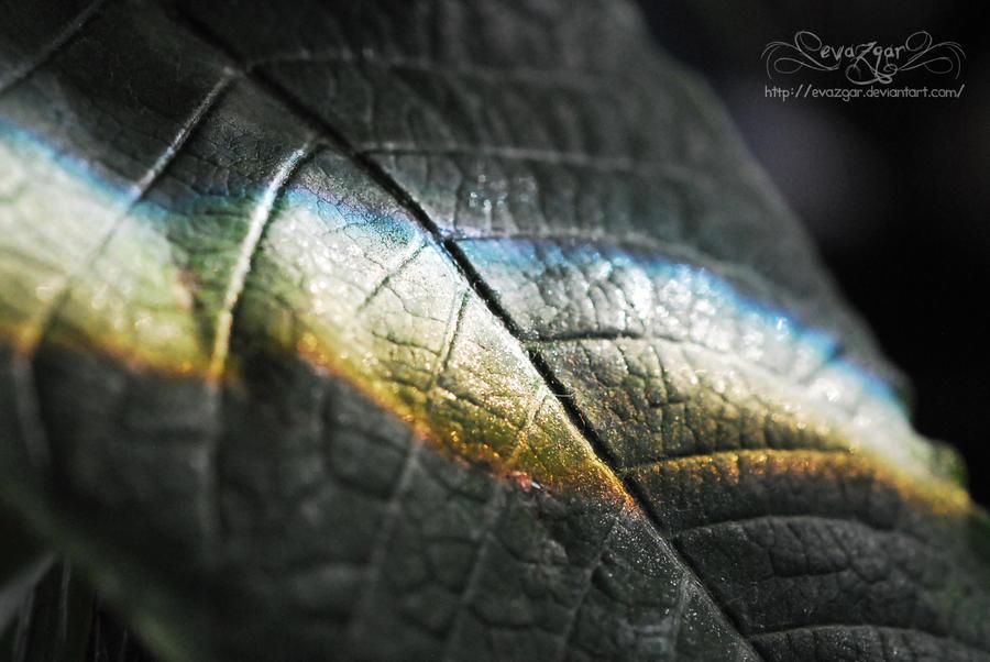 Rainbow. by Evazgar