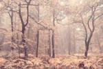 Autumn veil of oaks