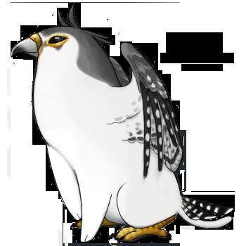 Pygmy Falcon by Kyrrahbird