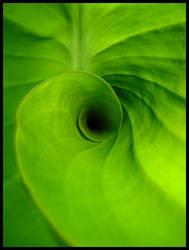F55 - Dimension Green