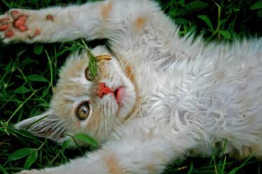 Kitten by HetherWassko