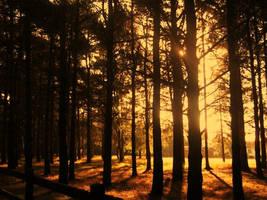Early One Morning by AethyrGaia