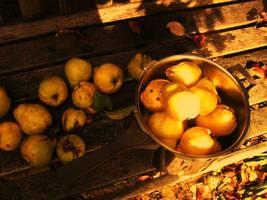 Harvest by AethyrGaia