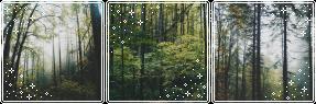forest mood bundle