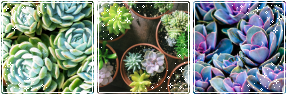 succulent mood bundle by kalakitten