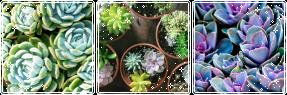 succulent mood bundle by kalakitten