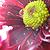 Flower Avatar by SarahxJane-Stock