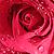 Flower Avatar II by SarahxJane-Stock