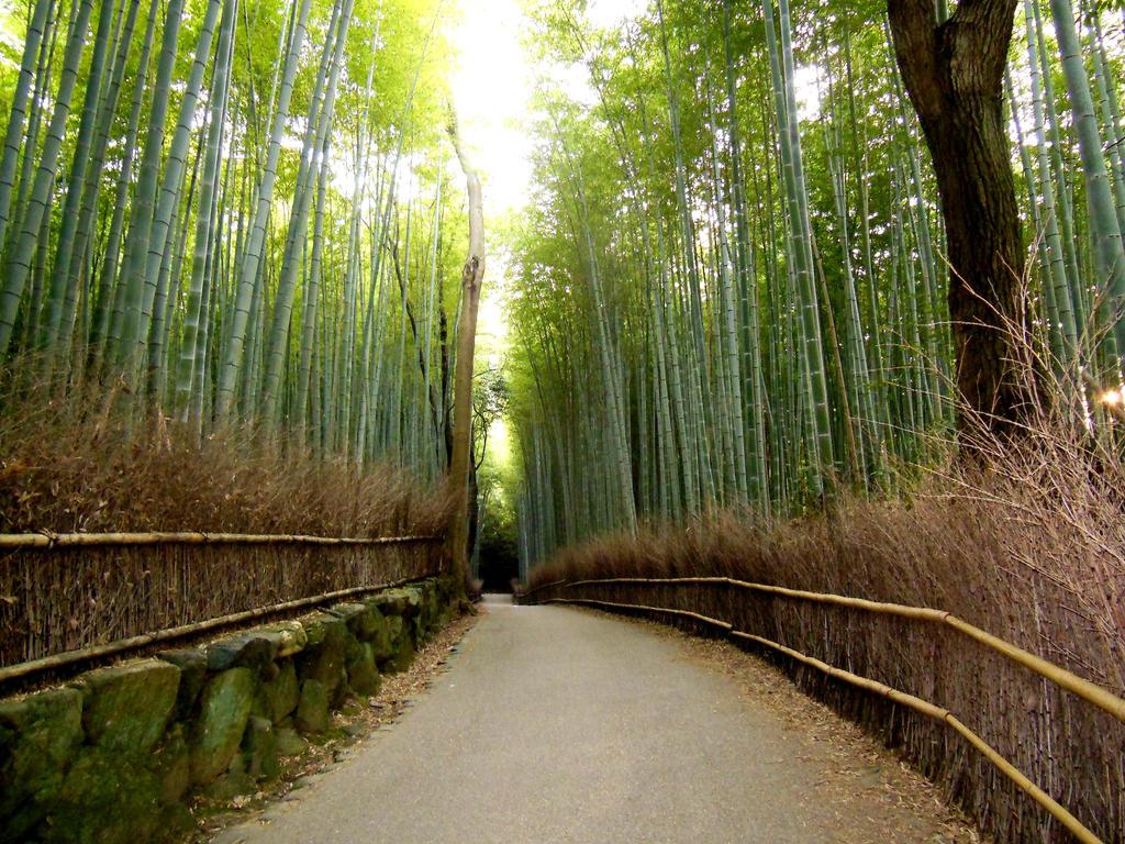 Bamboo forrest of Arashiyama by MColling