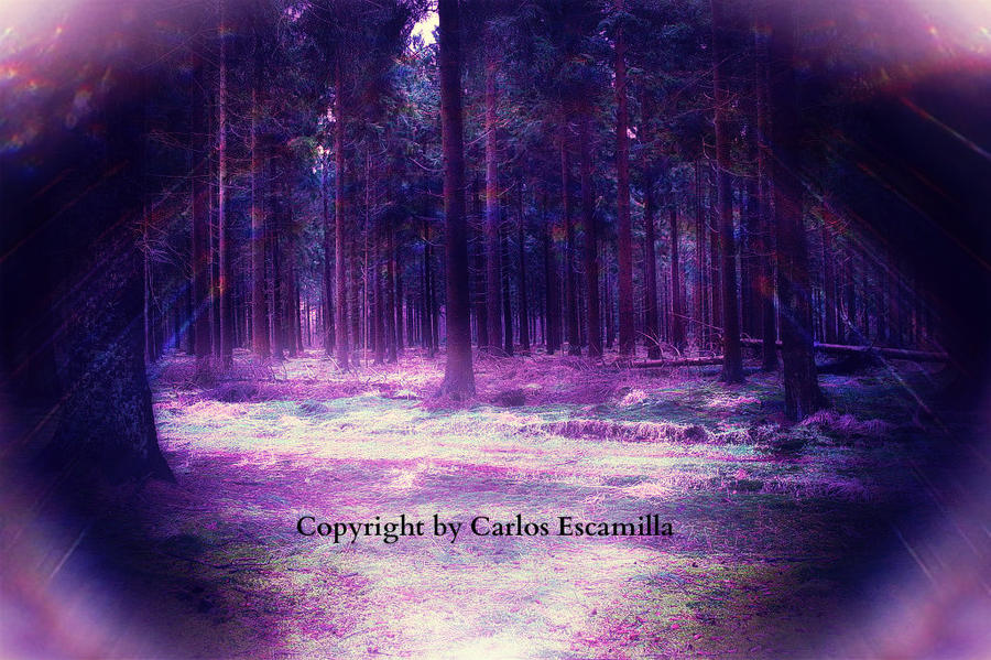Shiny Purple Forest by CarlosAE