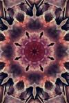 Texture Kaleidoscope
