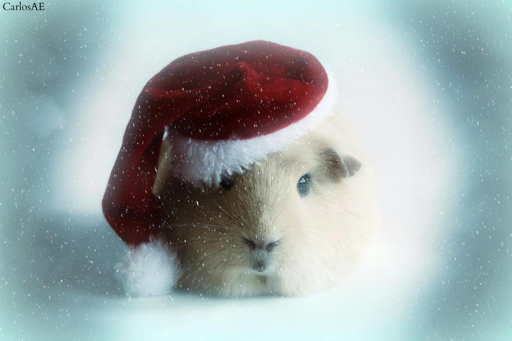 Santa Booboo Vs Blizzard of Winter by CarlosAE