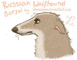 Russian Wolfhound Borzoi by AkumaAgma