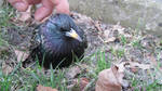 .:Bird:.