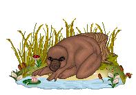 Platypus by Amavanna