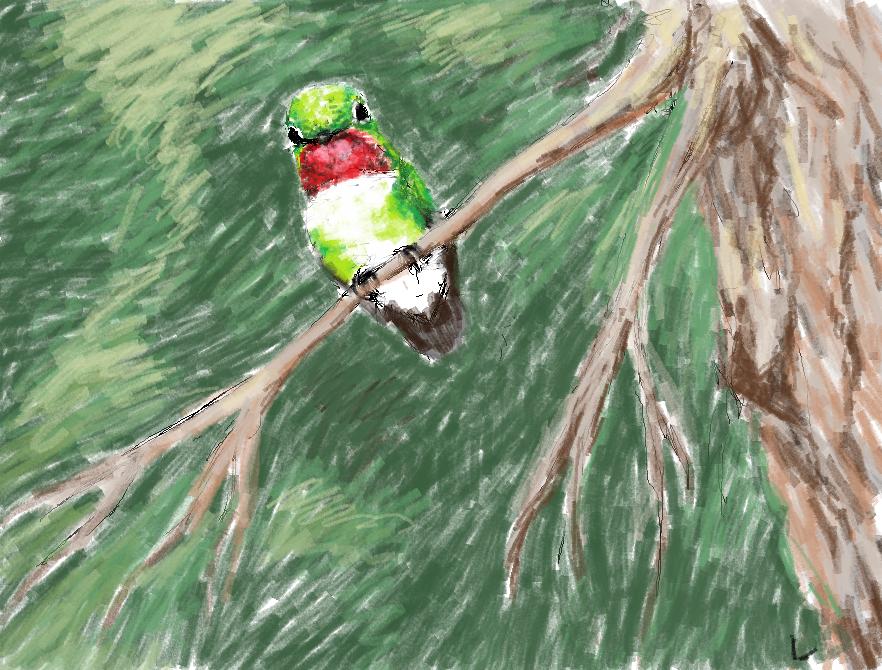 Roosting Hummingbird by dancingfoxbird