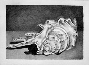 Shell - ACEO 214 by Arthay