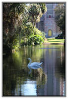 Bok Sanctuary Swan
