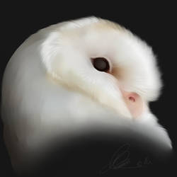 Barnowl || Request by Pandore-Cothere