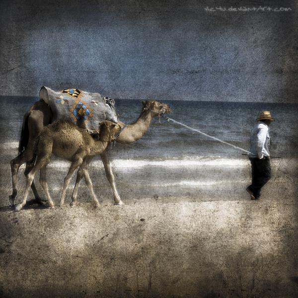 follow me... by Vic4U