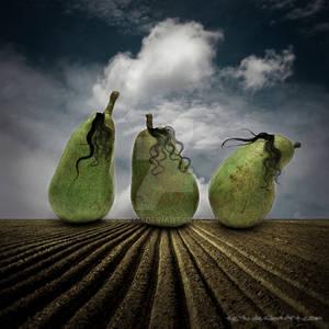 3 little pears