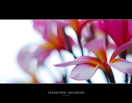 Frangipani Dreaming