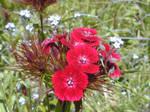 Flower in macro 005