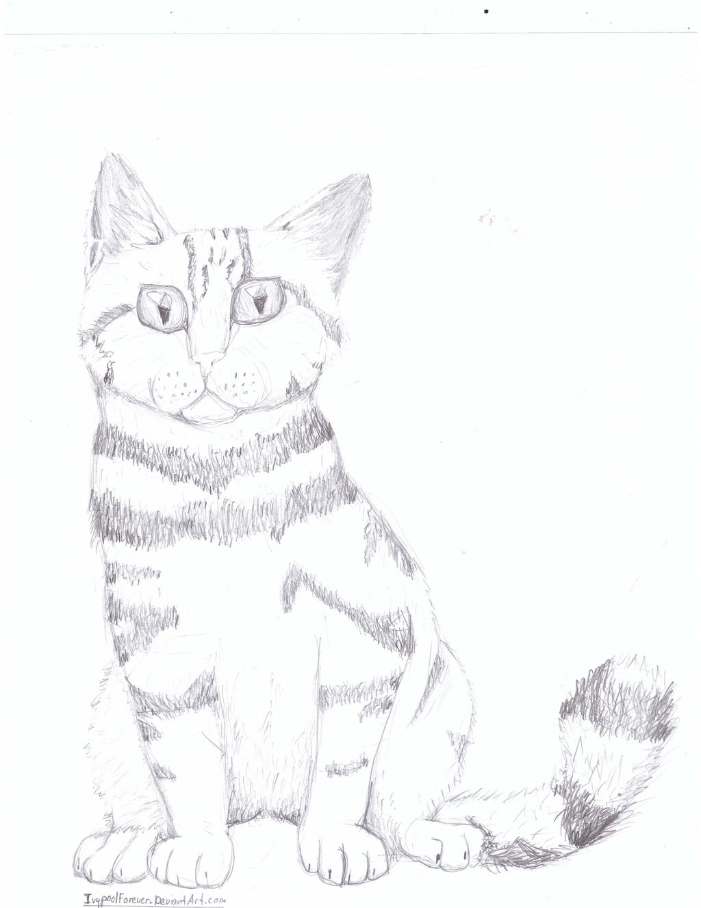 British Shorthair (No colour) by IvypoolForever