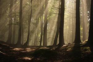 Magic Forest by nicubunu