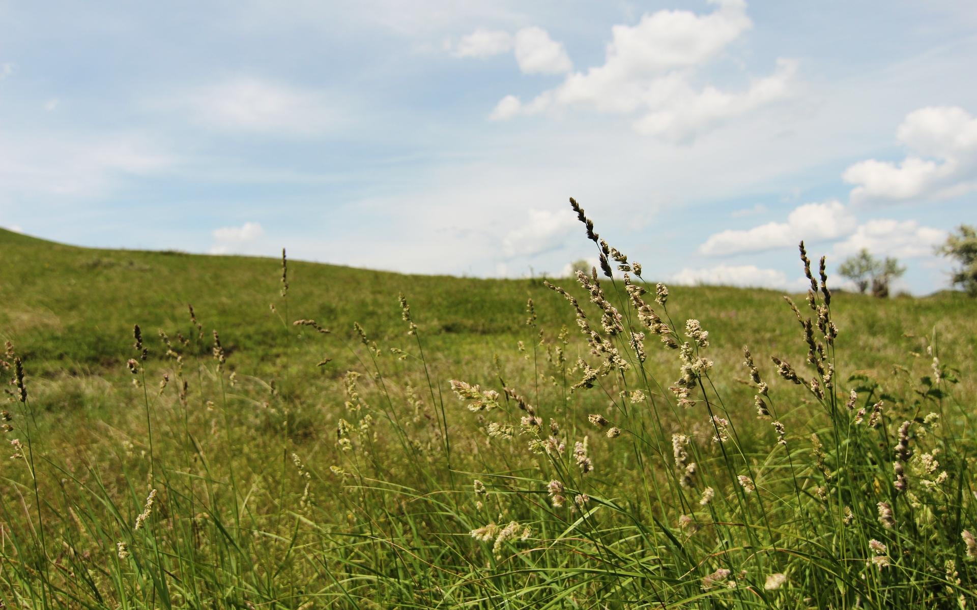 Grassy Field wallpaper - 554087