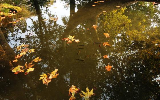 Autumn pond by nicubunu