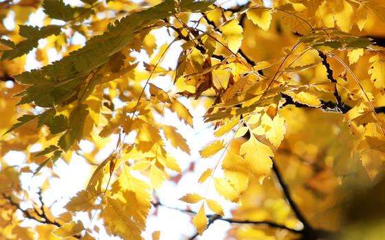 Yellows by nicubunu