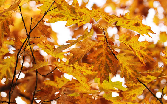Leaves by nicubunu