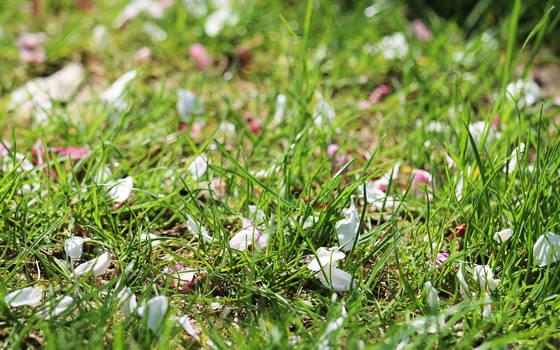 Grass and petals by nicubunu