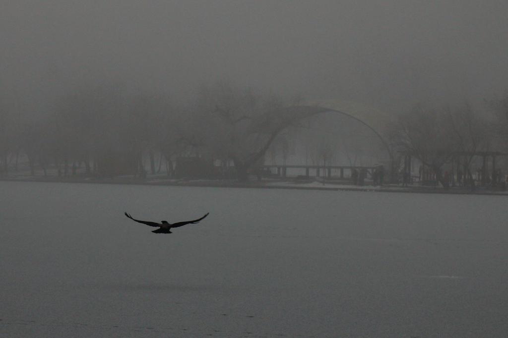 Lone flight by nicubunu