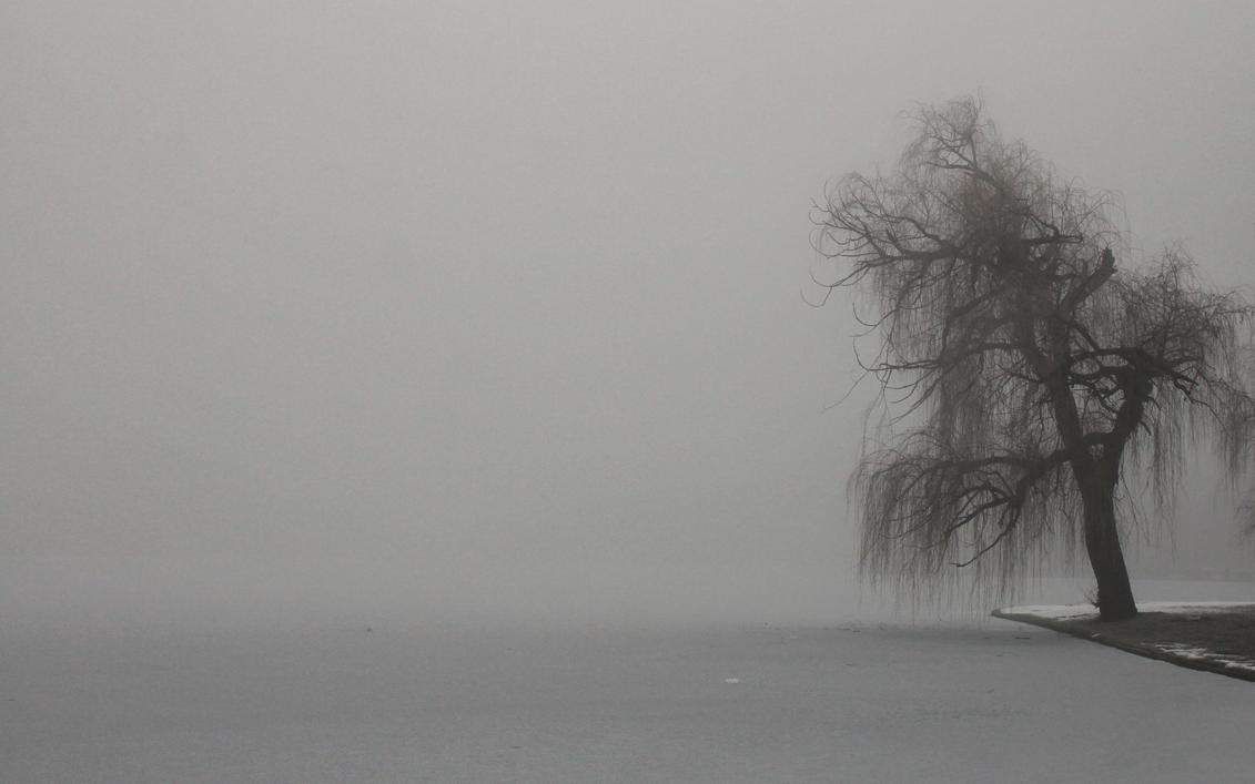 Just a tree by nicubunu