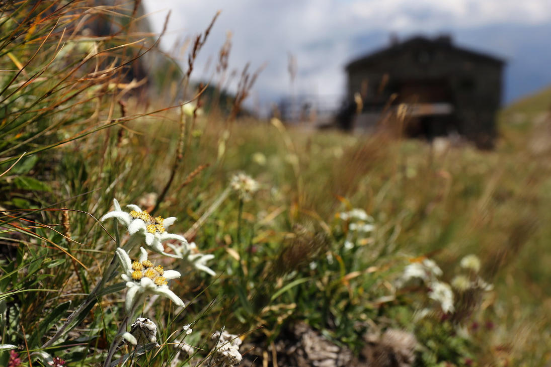 Mountain flowers by nicubunu