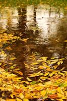 Reflection on autumn by nicubunu