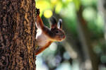 Good morning Mister Squirrel