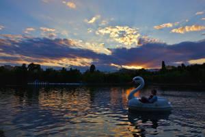 Kind of swan by nicubunu