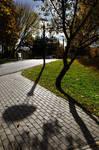 Shadows of autumn