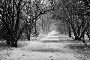 Winter tale by nicubunu